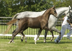 Windstar's 2011 foal, Gemini (Farrington)