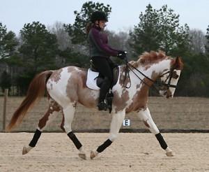 horse-training